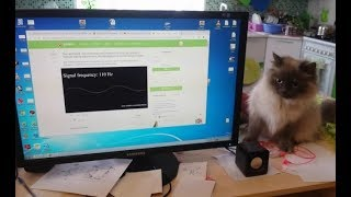 Реакция кошки на Звук. 20 - 20000 Гц.
