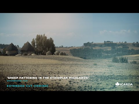 ICARDA Ethiopia 'Sheep Fattening in the Ethiopian Highlands' Documentary Film – EXTENDED CUT