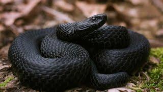 Осторожно массовое выползание змей уже началось