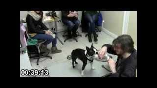 Consultation de désensibilisation à la manipulation vétérinaire