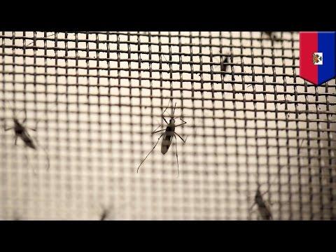 Virus Mayaro adalah Zika berikutnya - Tomonews