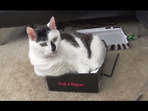 Frosty - Cat Week: Cats in small boxes