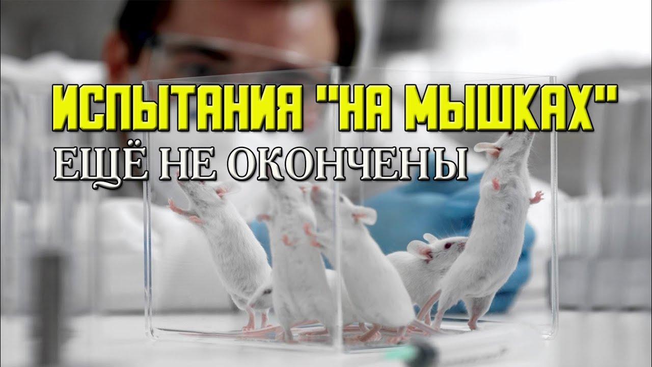 """ИСПЫТАНИЯ """"НА МЫШКАХ"""" ещё не окончены"""