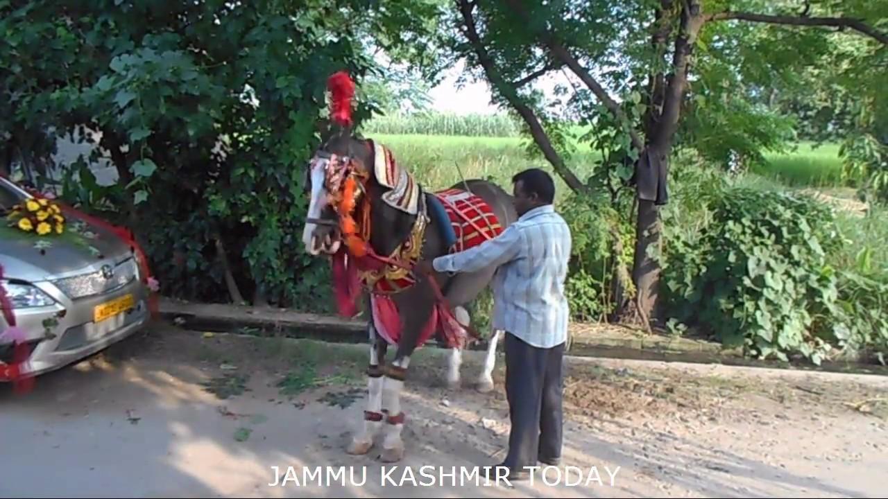 संगीत पर नाचने वाला घोडा -  JAMMU KASHMIR TODAY