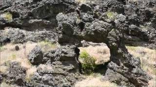 The Ant and The Yellowjacket, Nez Perce National Historic Park, Idaho, USA