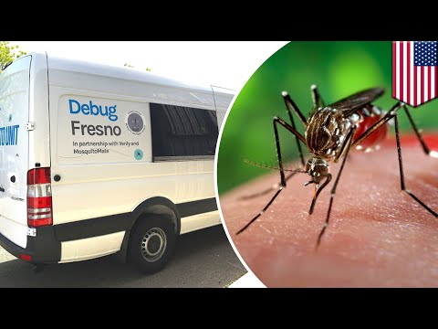 Millions of Wolbachia bacteria-infected mosquitoes to be released in Fresno, California - TomoNews