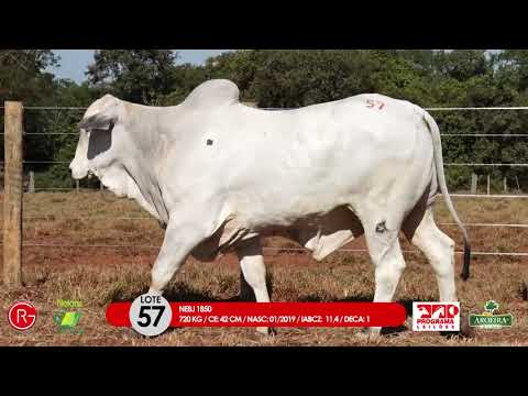 LOTE 57