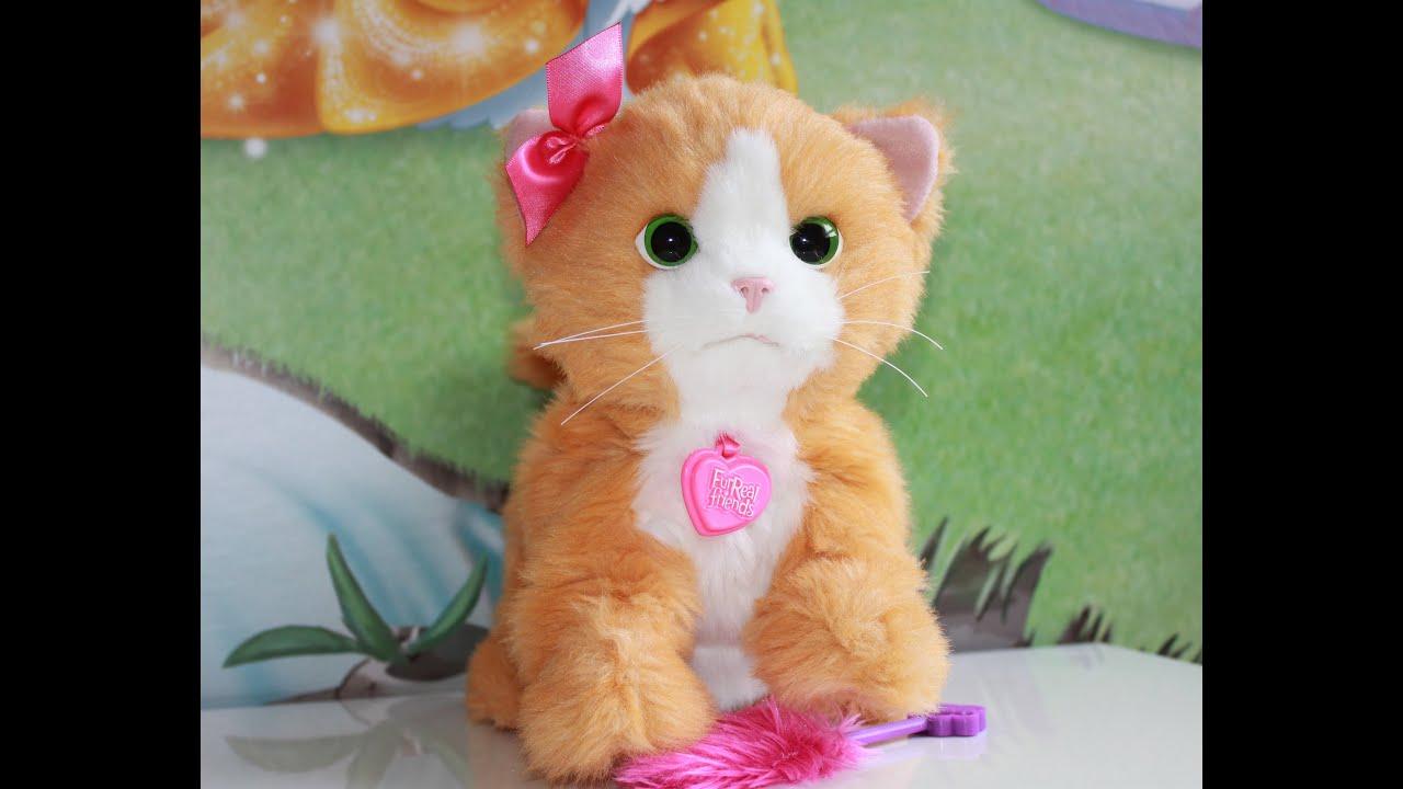 Питомник бурманских кошек №1 в россии. Отзывы о питомнике кошек. Котята бурма. Фото и видео кошек.