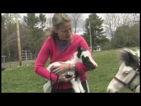 Einstein - The Smallest Horse In The World