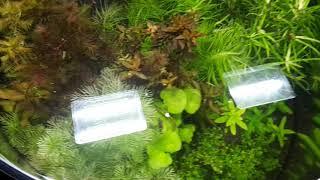 Pflanzenbecken