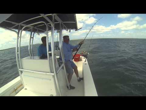 Morehead City, NC Fishing For Cobia