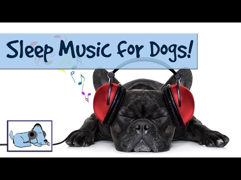 20-minutes-of-sleepy-dog-music!-send-your-dog-to-sleep-with-relaxing-music-made-for-pets!