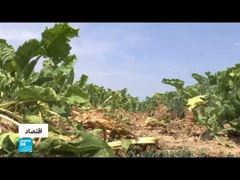 موجة حر وجفاف تهدد نشاط المزارعين في ألمانيا  - 15:24-2018 / 8 / 3