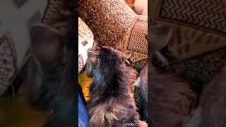 Котику ходи до мишечки