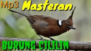 Mp3 masteran burung cililin