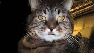 Re: Ivan The Cat Tells A Bad Joke