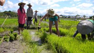 Chiang Mai Thai Secret Cooking Class, Organic Rice Farm, Part 5