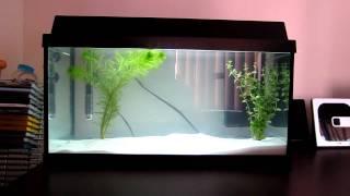 juwel korall 60 aquarium 54l 14 gallons