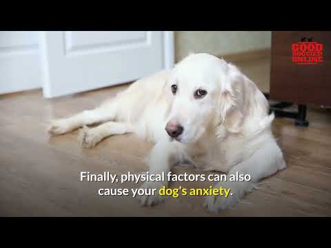 7 Dog Anxiety Remedies To Reduce Your Dog's Anxiety