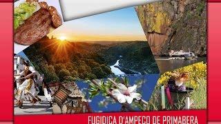Fugidica D
