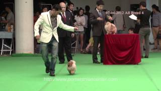 April, 7, 2012 ; All Breed 4 Pomeranian Show