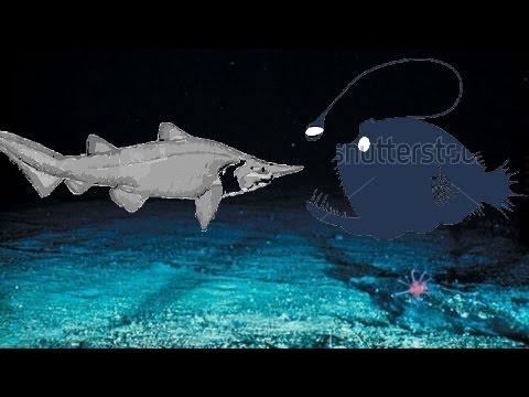 Anglerfish Vs Goblin Shark