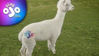 PlayOJO.com - Find your OJO at the fair Casino – 10' Bonuses paid in cash