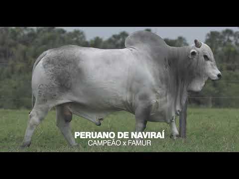 LOTE 07 - PERUANO DE NAVIRAÍ