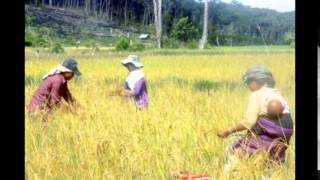 VN-VIETNAM FARMERS GO TO LAOS TO GROW CLEAN RICE