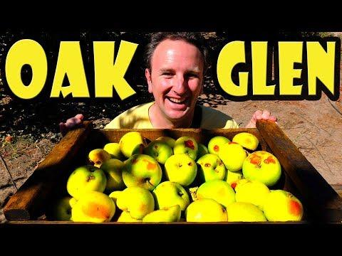 Oak Glen California - Apple Picking Near Los Angeles