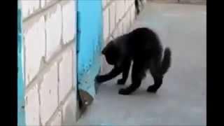 Кошка спасает собаку Очень трогательно