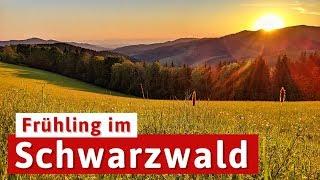 Frühling im Schwarzwald - die Natur erwacht