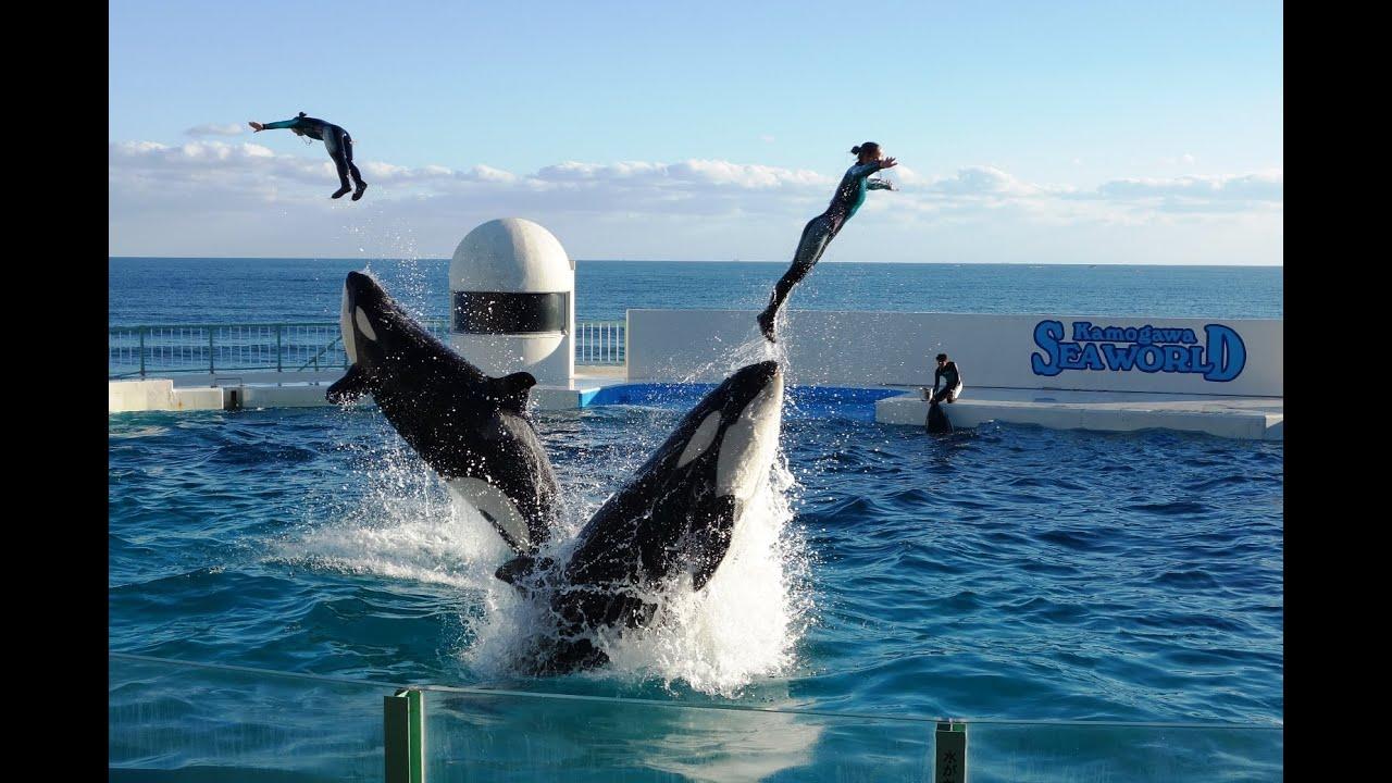 Orca show at 1.00 p.m, Kamogawa Sea World, November 14, 2014 - YouTube