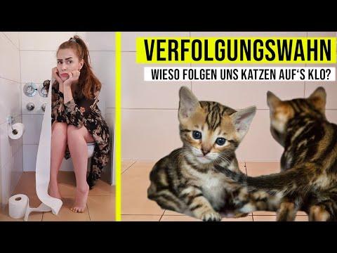 Warum Folgen Uns Katzen Auf Die Toilette / Typisch Hauskatze / Amely Rose & Catwalk