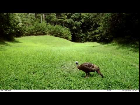USA Recruit Turkey Video
