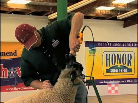 Shearing and Fitting your Sheep for the Show Ring Pt 1