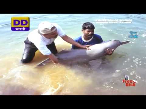 Dolphines of Holy River Ganga
