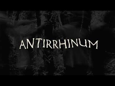 Botanist - Antirrhinum [Official Music Video]