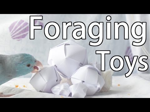3 Quick and Easy Foraging Toys | DIY