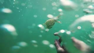 🌊💍 ТОП Подводная находка. ЗОЛОТО, СЕРЕБРО. Подводный поиск.