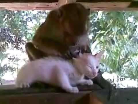Kitten and Monkey Bonding!
