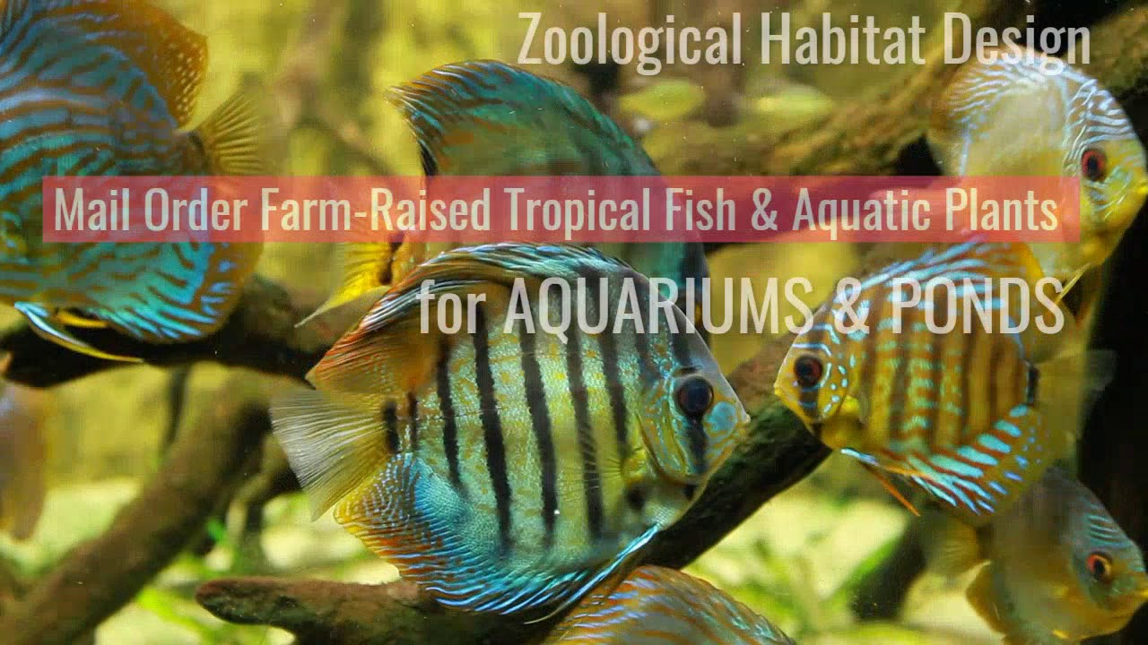 Aquarium Fish, Plants & Accessories - Arizona Aquatic Gardens