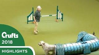 Kratu the rescue dog having fun in the Rescue Dog Agility   Crufts 2018