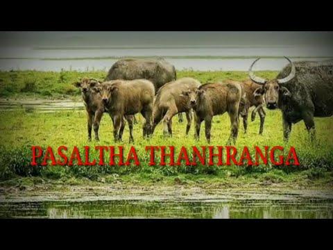 PASALTHA THANHRANGA (BUNG 1 & 2 NA)