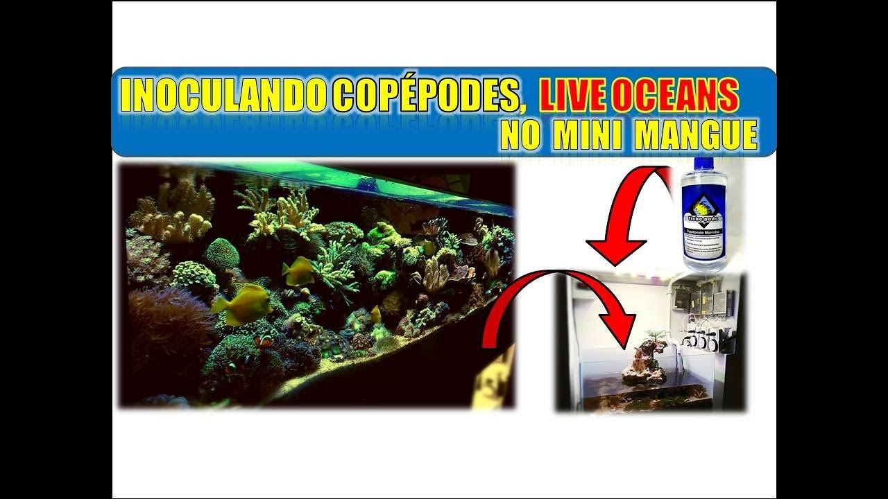 Aquário marinho, inoculando Copépodes no mini mangue!