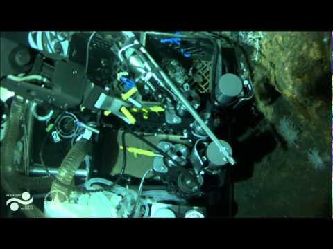 FK008 - Nereus Dive 058 PART III - Oases 2013 - 24 June