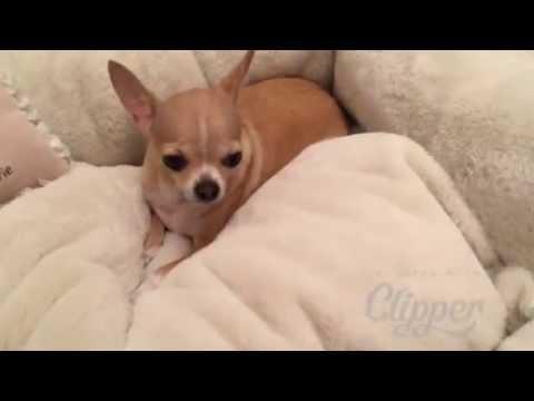 Лежанка для собак «Секрет» VIP-DOG.COM Интернет магазин одежды для собак