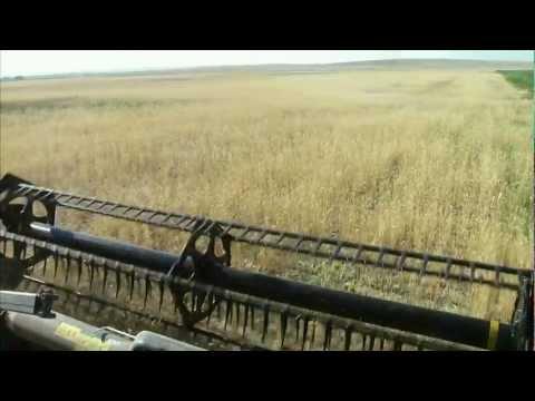 Wyoming Winter Wheat Harvest - America's Heartland