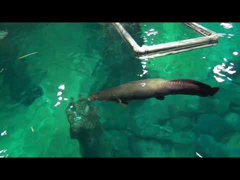 river safari video