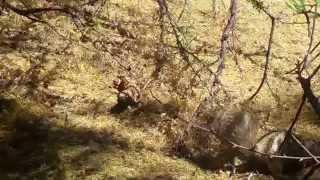 Squirrel v Gila Monster